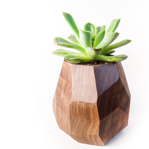 Faceted Geometric Succulent Planter - Walnut