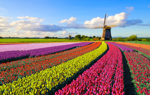 Overview of Payroll in the Netherlands