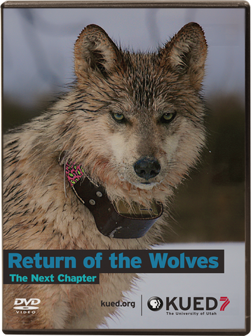 Return of the Wolves: The Next Chapter