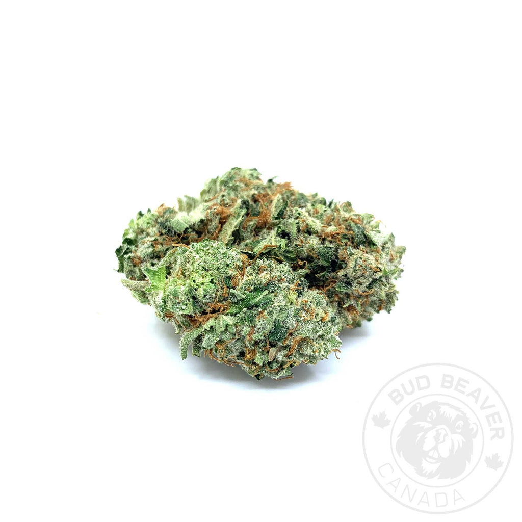 buy-black-domina-indica-cannabis-strain-at-bud-beaver-canada