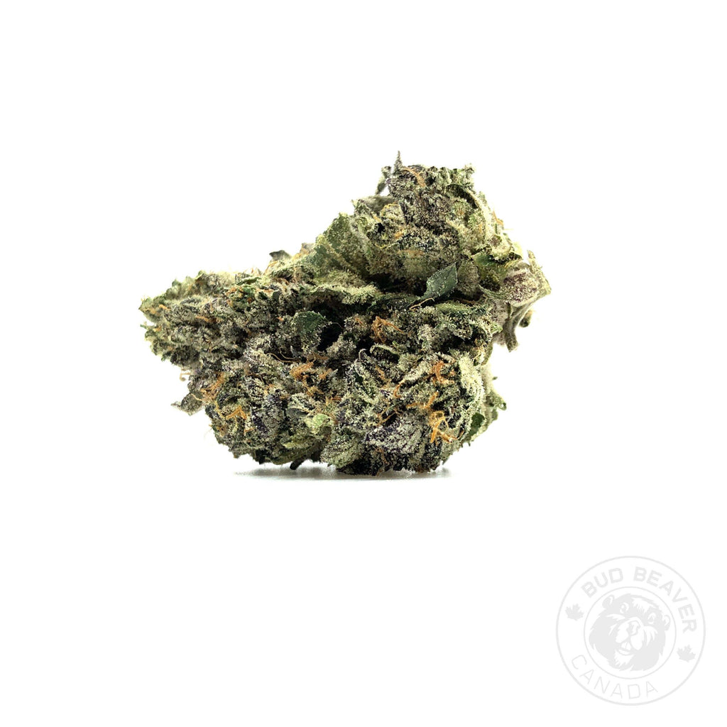 buy gelato cannabis online at bud beaver canada the best online dispensary in canada