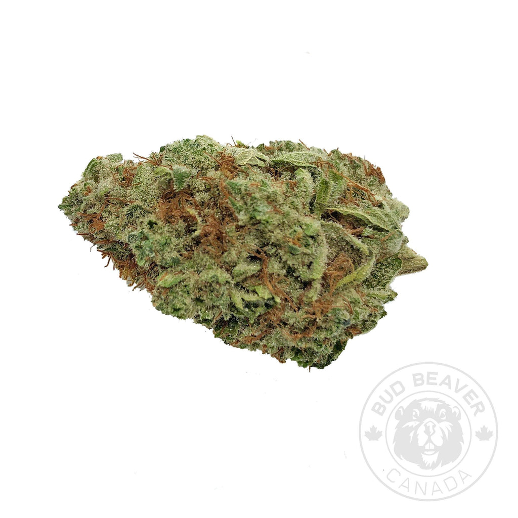 Chocolope Sativa Cannabis Strain