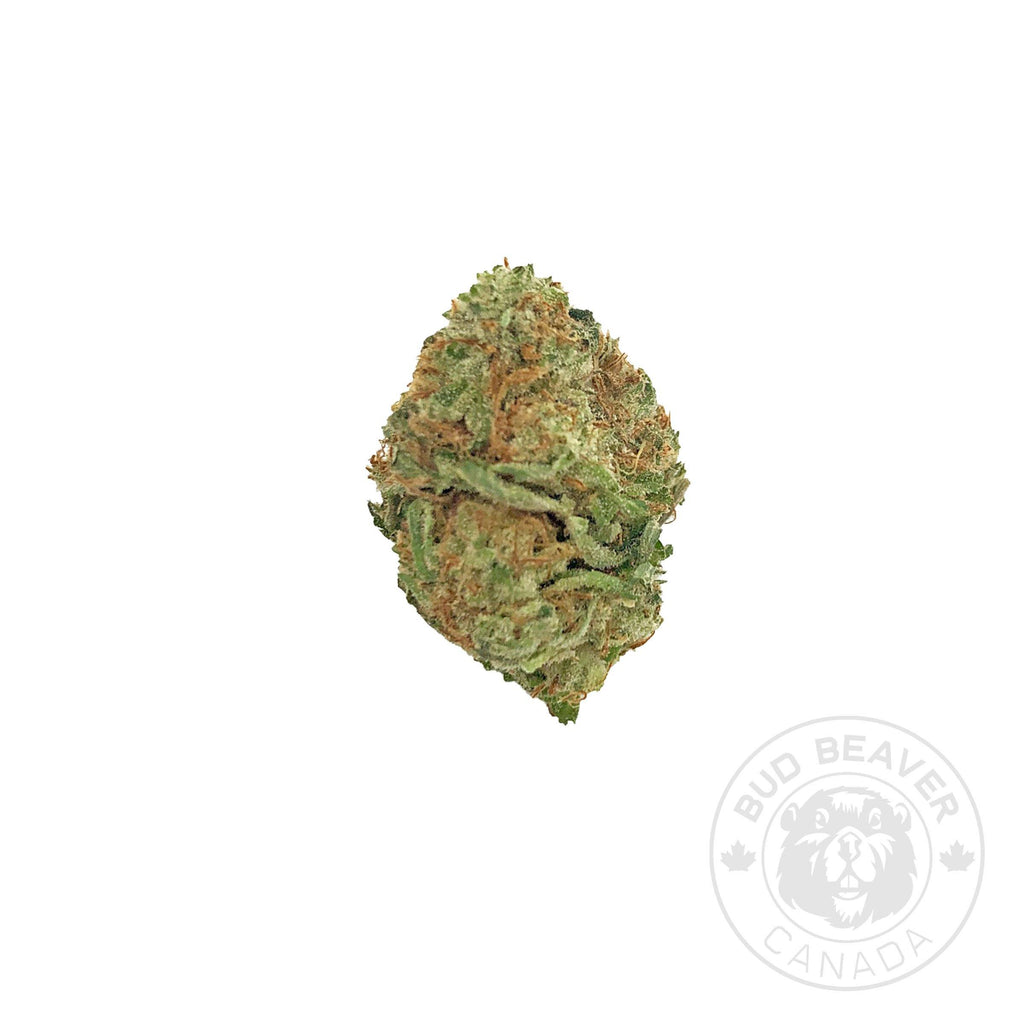 Citrus Punch Sativa