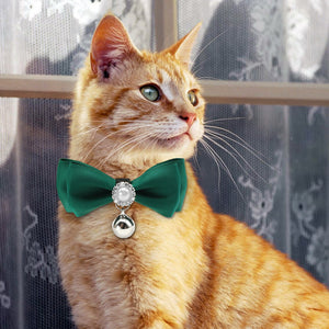 unique cat collars
