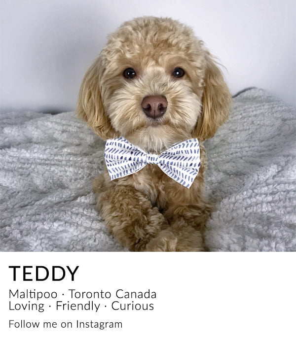 @tails.of.teddy instagram link