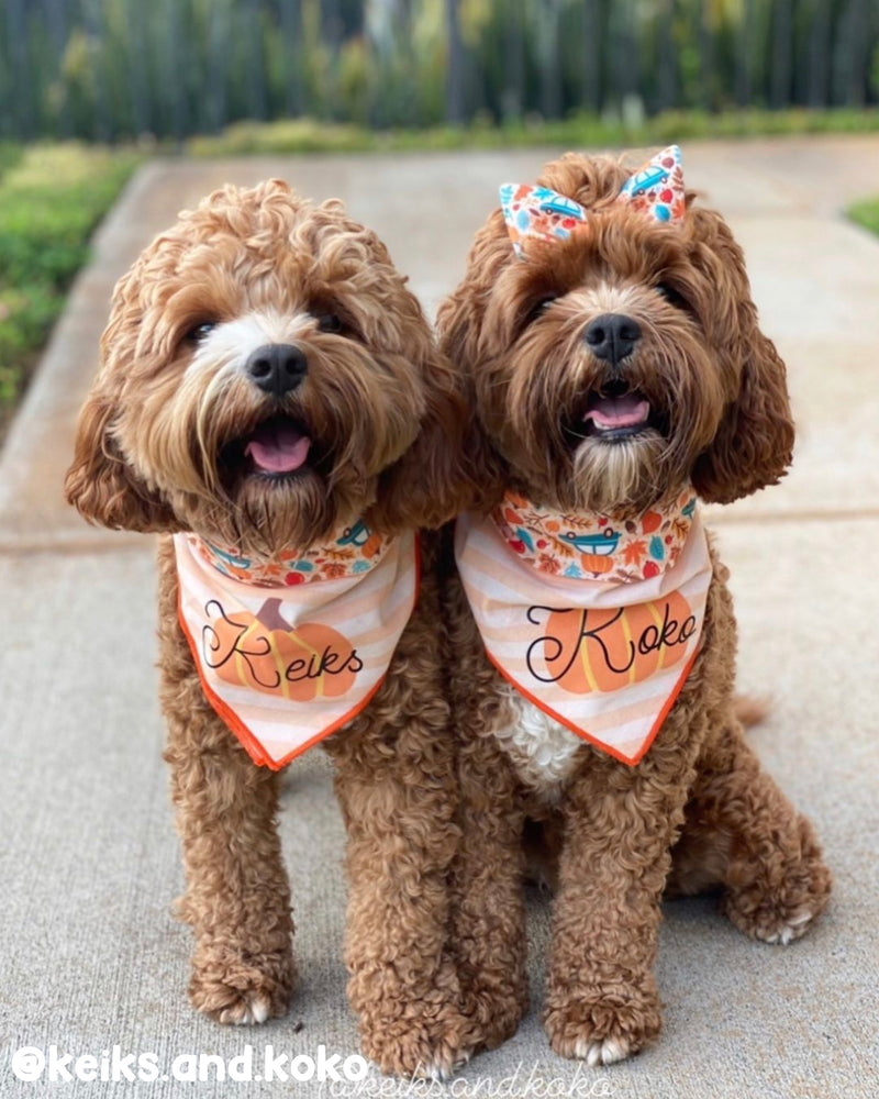 Pumpkins and Cars - Double Sided Dog Bandana