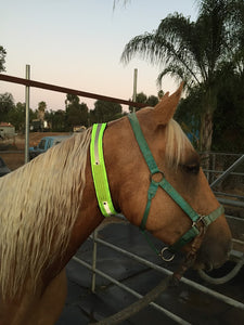 Horse Identification Collar