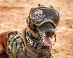 articles/army-dog.jpg