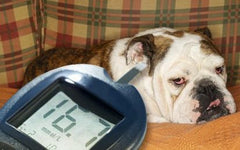 articles/diabetes_dog-413x258.jpg