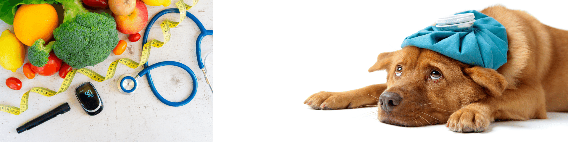Signs of diabetes in dogs