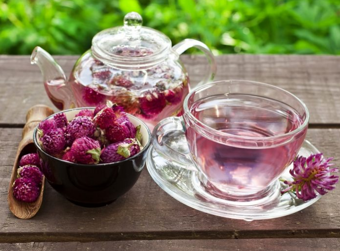 How to harvest Red Clover Tea and use daily for cancer prevention, indigestion, high cholesterol, hot flashes, menopause, breast tenderness, etc.