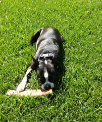 Nature's Own USA Smoked Jumbo Rib for Dogs