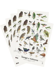 NZ native bird poster - 5 pack