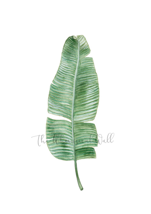 Banana Leaf fine art print by Australian artist, home decor, office design or children's spaces.