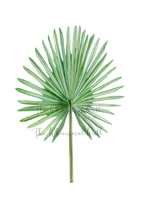 Fan Palm Fine Art Print