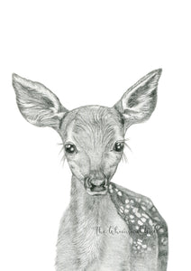 Fawn Drawing