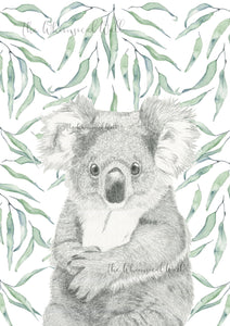 Koala with gum leaves