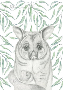 Bush Tailed Possum with gum leaves