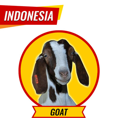 Aqiqah in Indonesia - Goat
