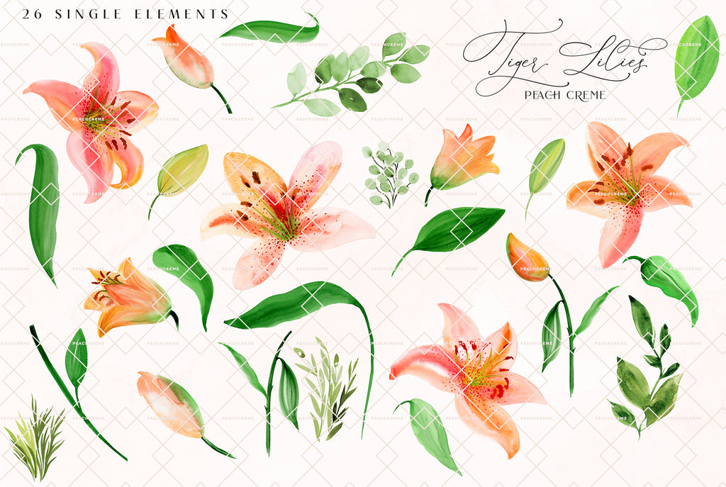 Tiger Lilies // Illustration Vol.3