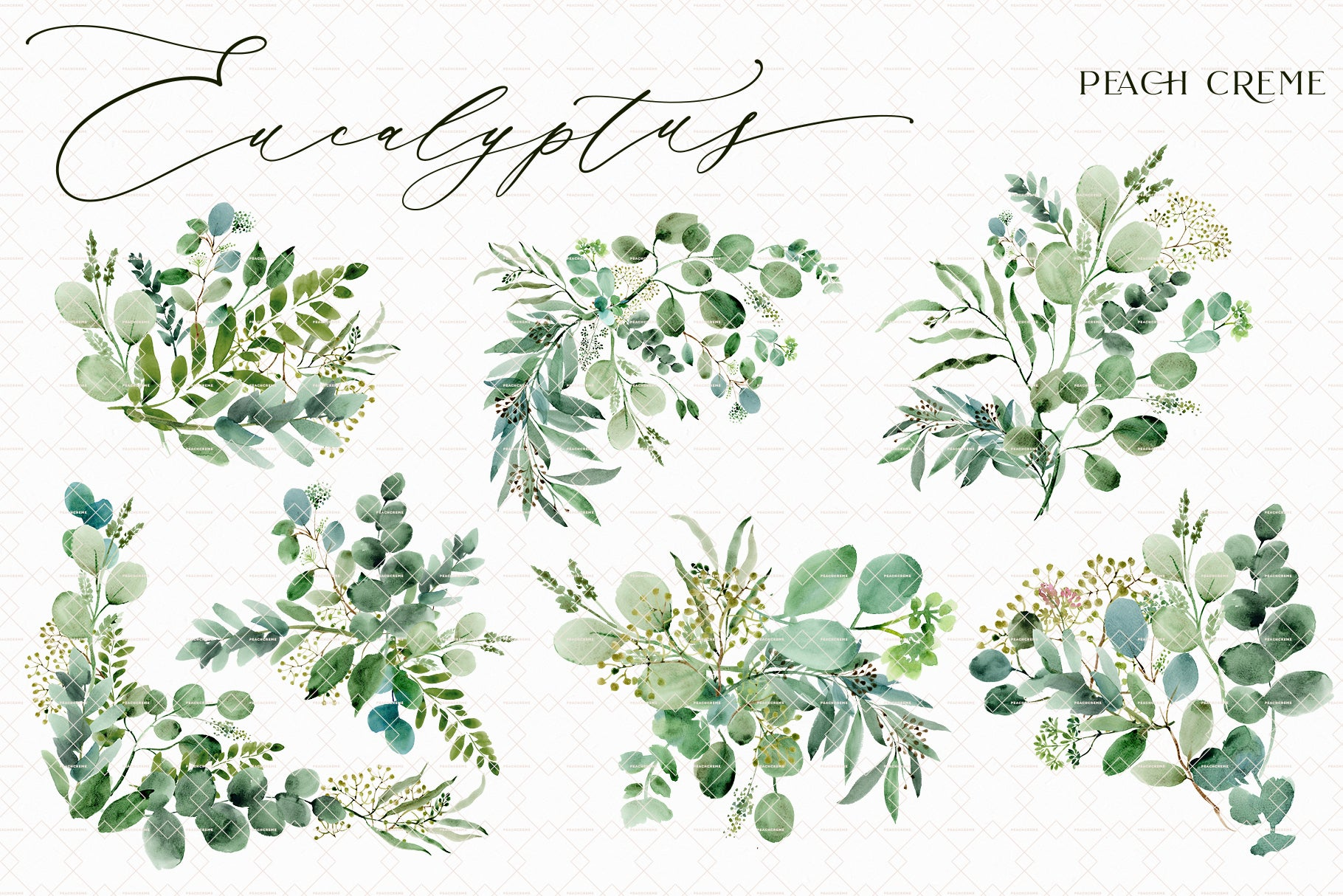 Eucalyptus // Illustration Vol.3