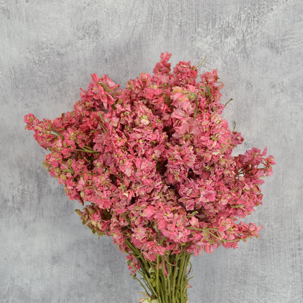 Dark Pink Delphinium Bunch