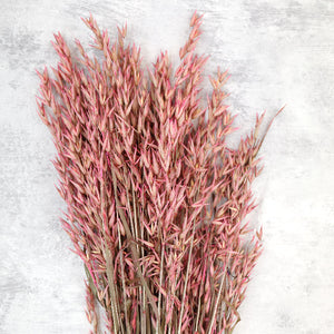 Pink Dried Oats Bunch