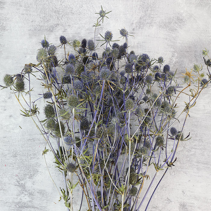 Dried Thistle Bunch