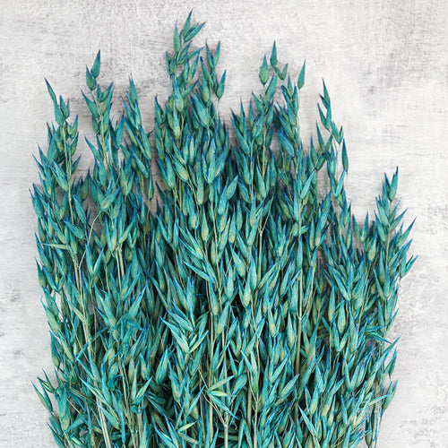 Teal Blue Dried Oats Bunch