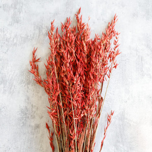 Red Dried Oats Bunch