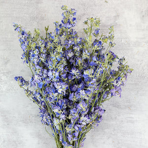 Pastel Blue Delphinium Bunch