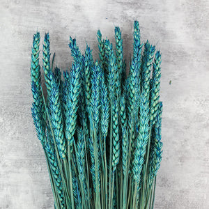 Blue Dried Wheat Bunch