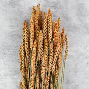 Peach Dried Wheat Bunch