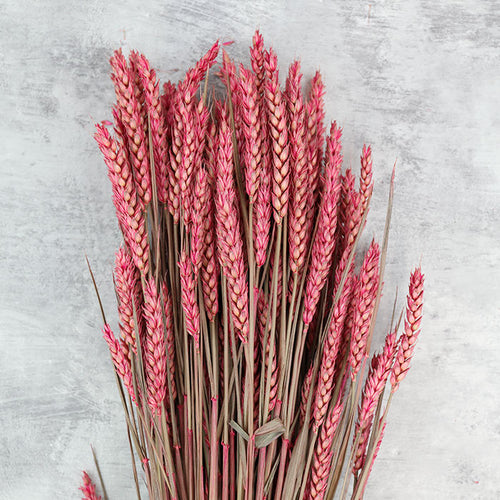 Pink Wheat Bunch