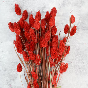 Red Phalaris Bunch