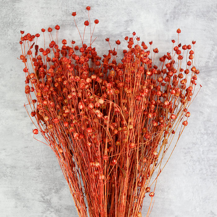 Red Linum Bunch