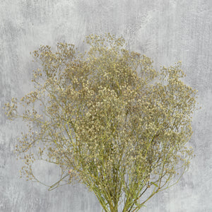 Create Your Own Dried Flower Bouquets and Arrangements - Ivory