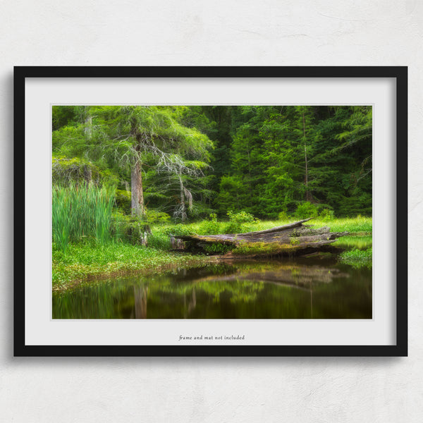 Alligator Lake print framed