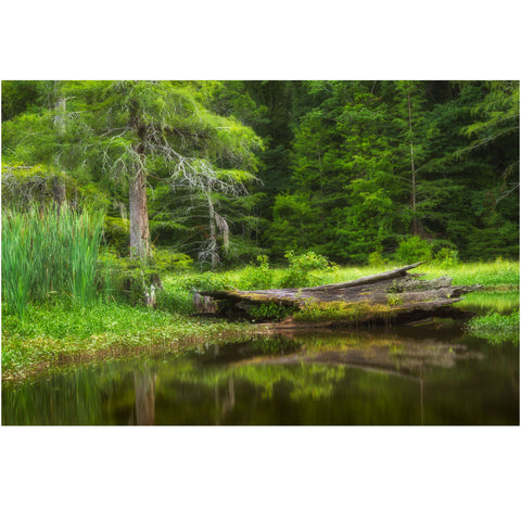 Alligator Lake Mississipi  wall art print