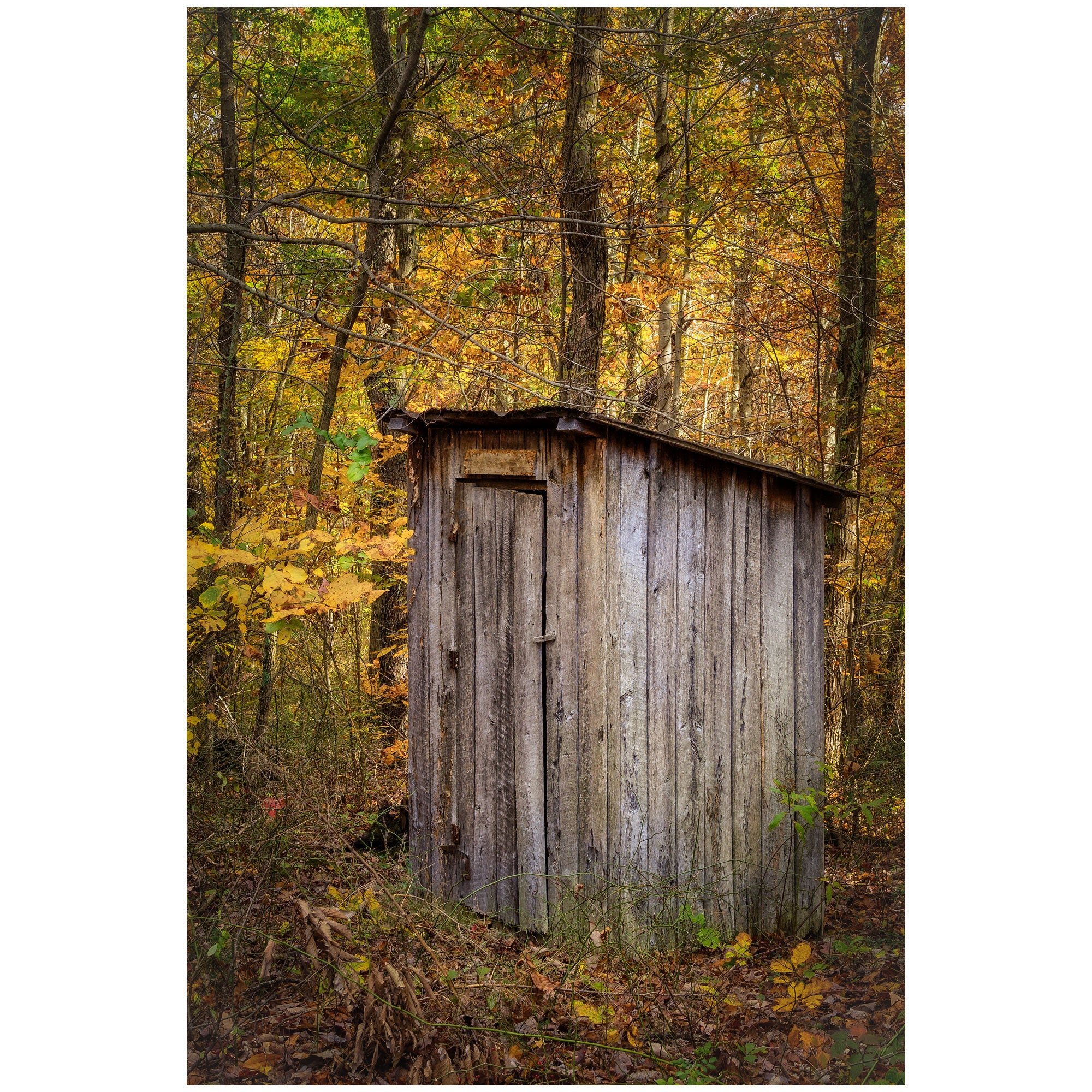 autumn outhouse in a forest of fall leaves