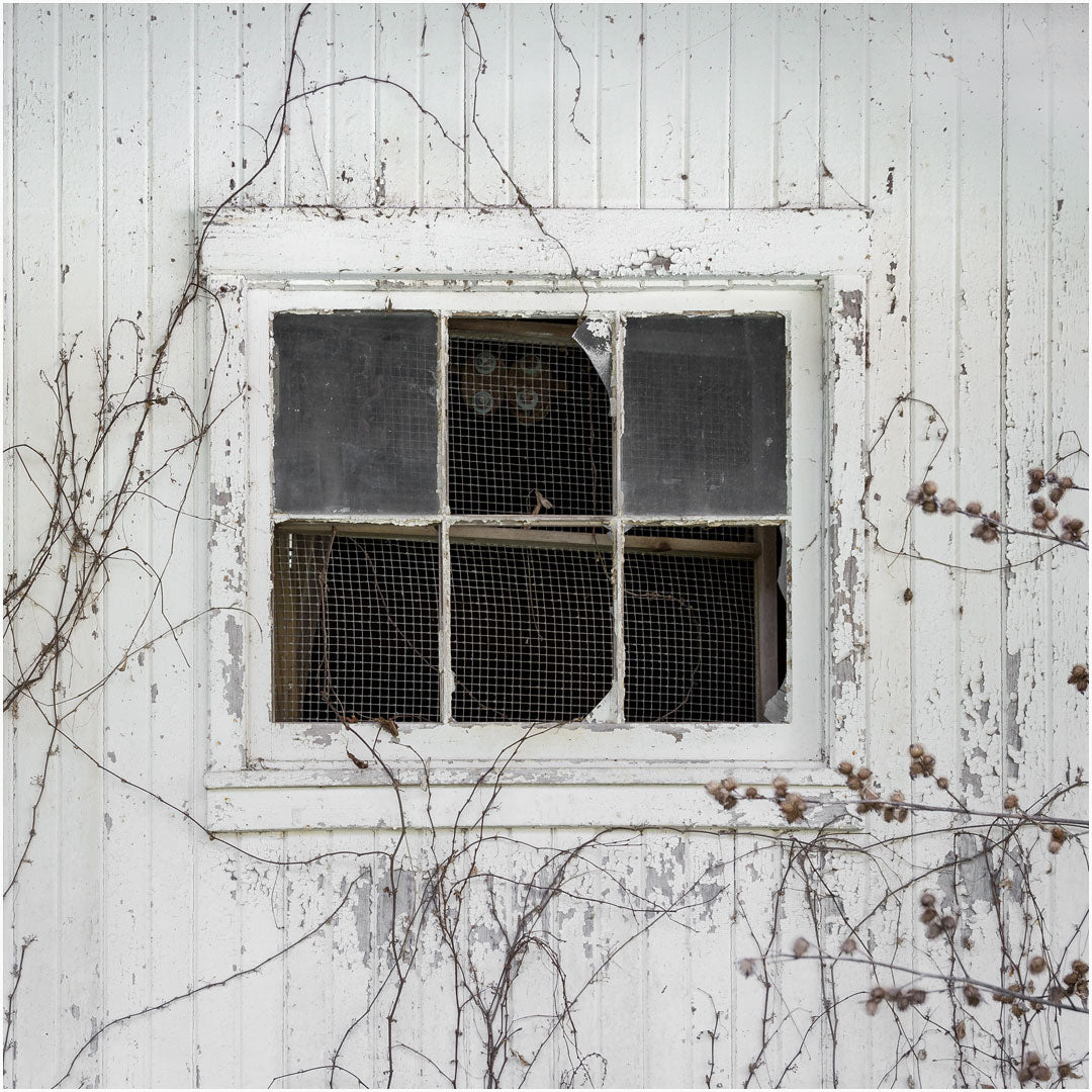 white barn window print