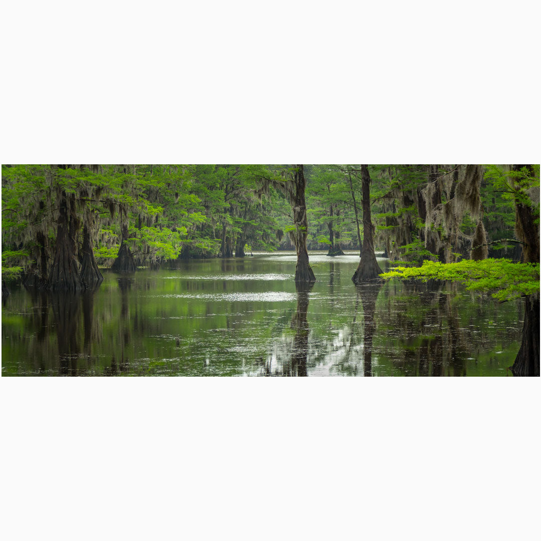 wall art of caddo lake state park in texas