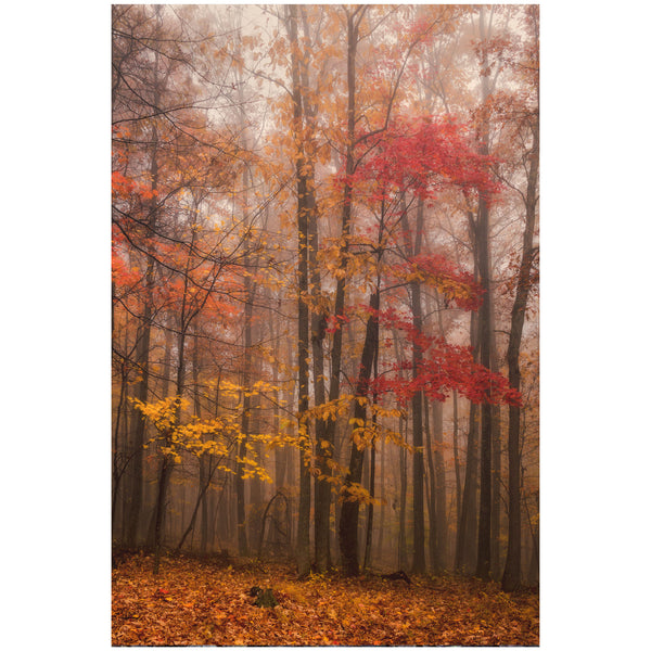 Fall in New River Gorge Photography Wall Art Print