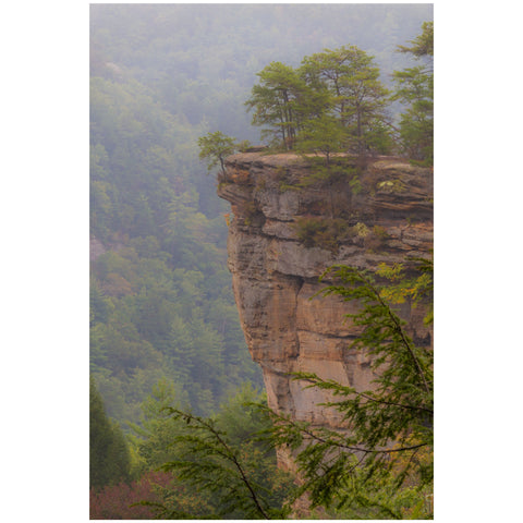 fog in red river gorge kentucky wall art print