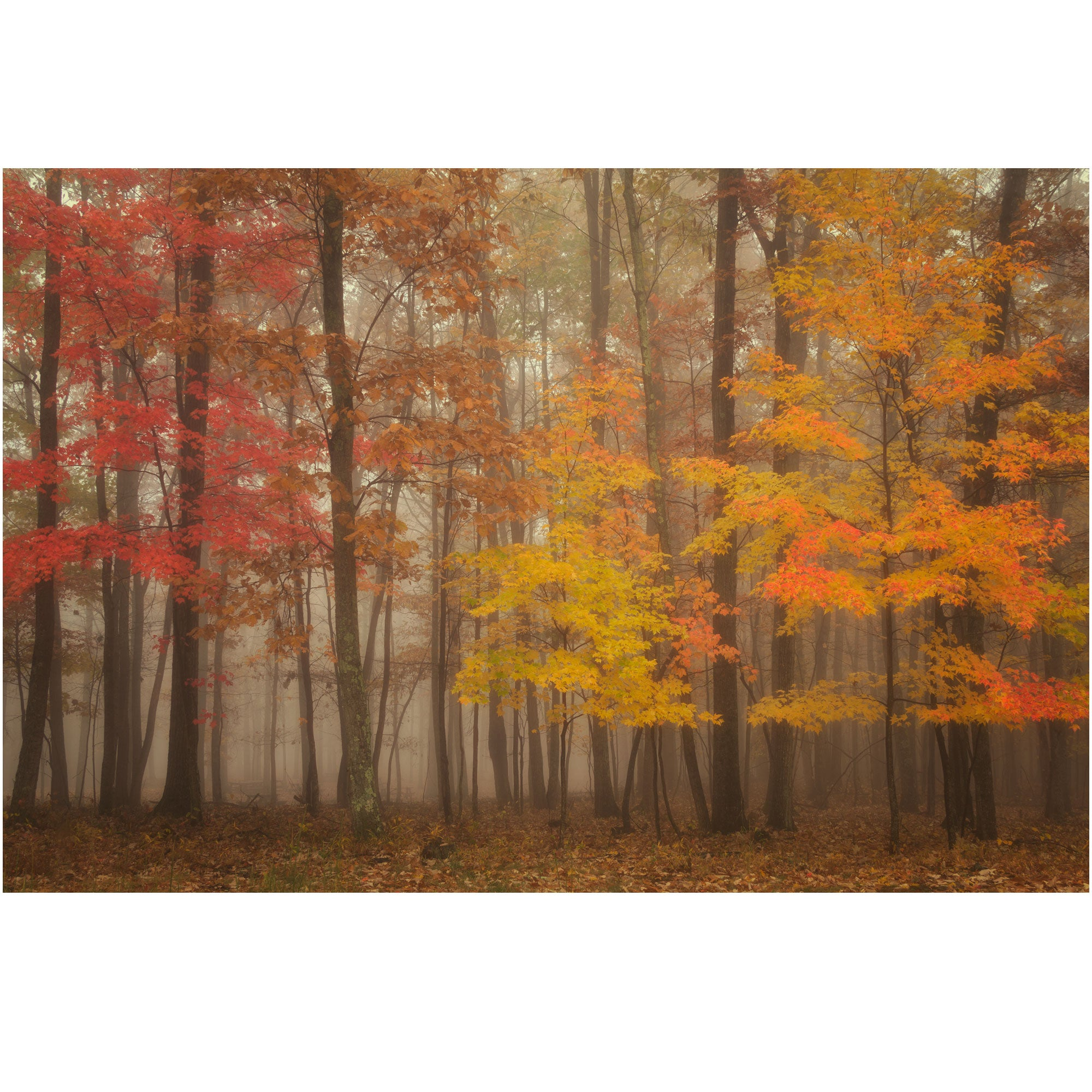 Foggy Fall Morning Nature Canvas Wrap