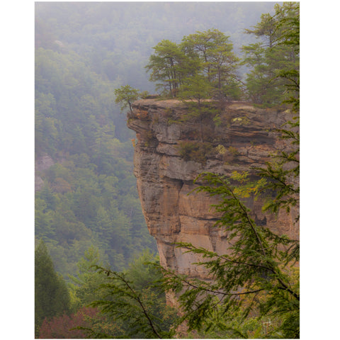 fog in the gorge at natural bridge state park in kentucky