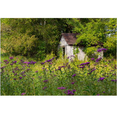 old shed in the garden canvas wrap
