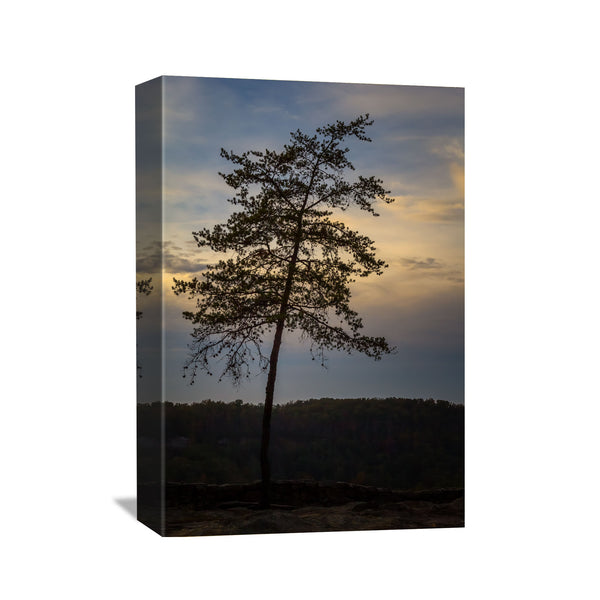canvas wall art of a lone pine tree