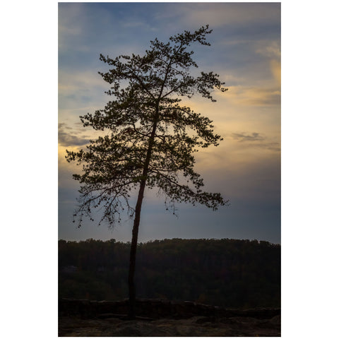 lone pine tree silhouette against a sunset