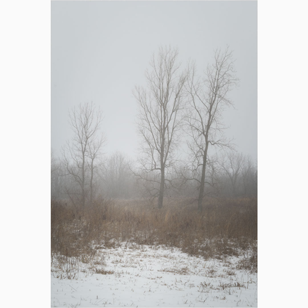 nature photography print of winter trees